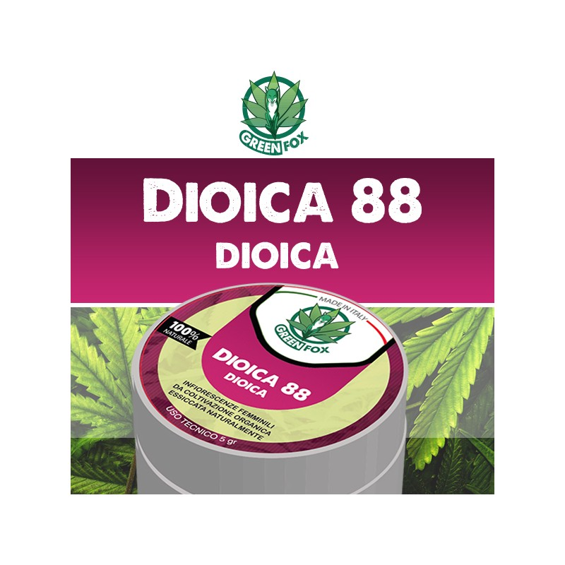 Dioica 88 Dioica